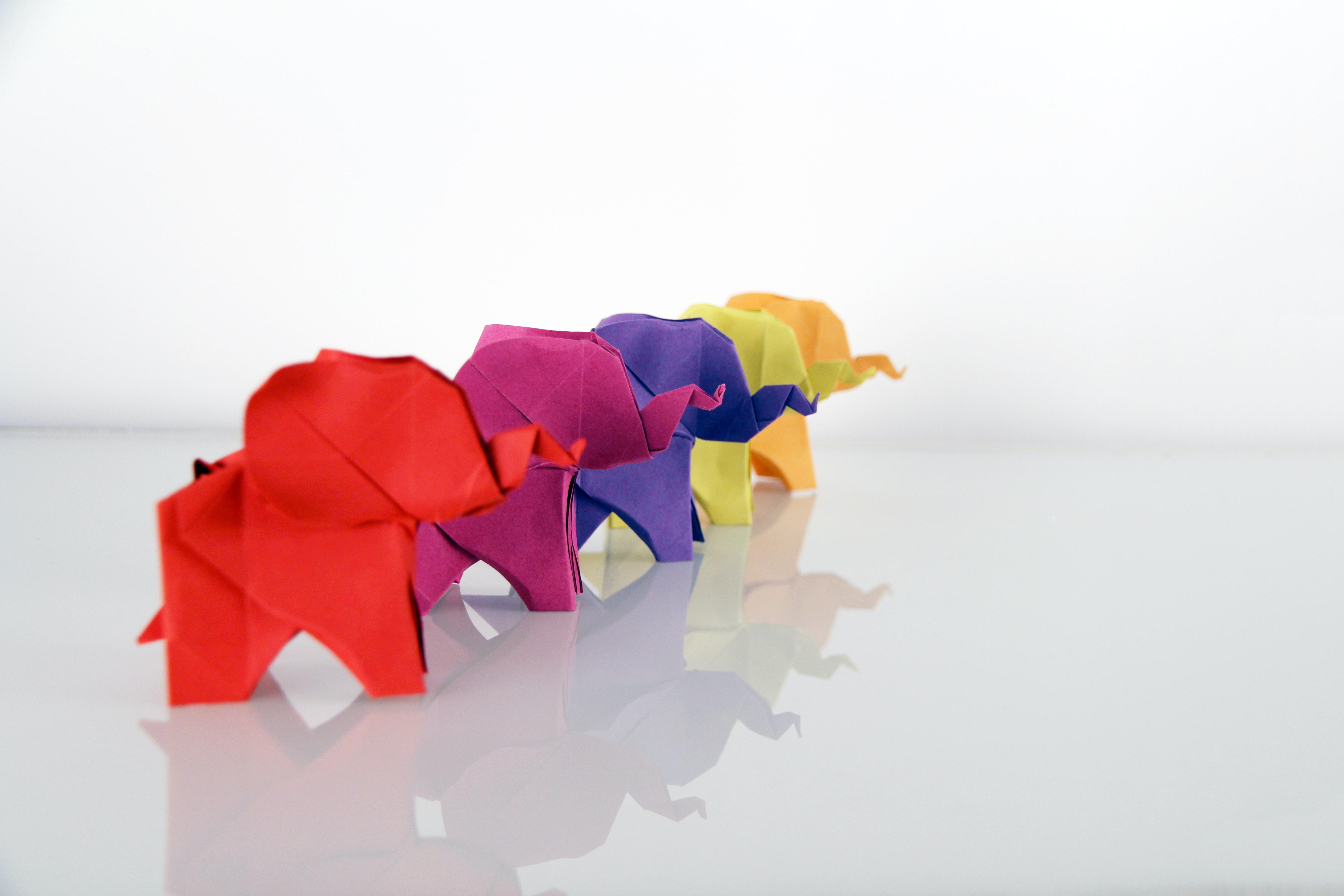elephantunsplash